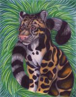 Clouded Leopard by Eviecats