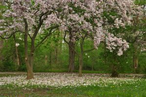 Magnolia Scene Stock 01 by MeetMeAtTheLake2Nite