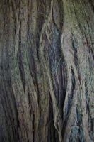 Textures - Trunk 3 by Monumnas-Stock
