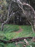 Forest path by tamaraR-stock