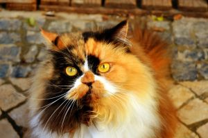 My Cat by FotoSigma