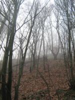 UNRESTRICTED - November '09 - Foggy Forest 11 by frozenstocks