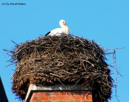 Stork 4 by bluesgrass