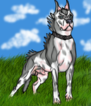Warr Dog Breed Standard by lighteningfox