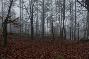 Foggy Forest 11 by sacral-stock
