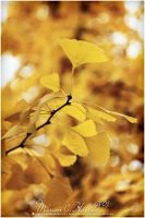 the golden season by Finvara