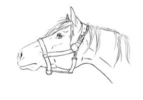 Horse head lineart by tNienjaa