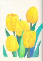 Yellow Tulips by visque01