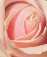 Light Pink by nviki89