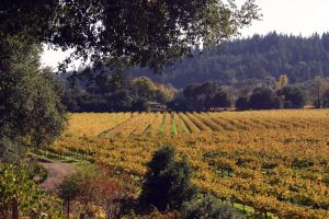 Vineyard in Autumn by Chibihalo