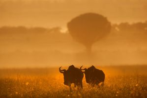 My Africa 54 by catman-suha