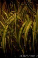 The green plant - Day 26 - 26/01/13. by oEmmanuele
