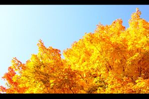 Duluth Leaves 01 by ODIRiKRON