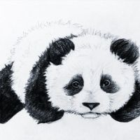 Panda Sketch by CiaraLeanneM