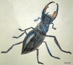 Stag Beetle by catshere