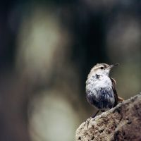 perched ocho by ornithophobia