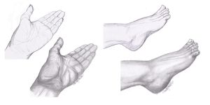 HAND AND FOOT STUDY by SCT-GRAPHICS