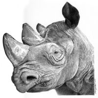Mzima the rhino by hartr