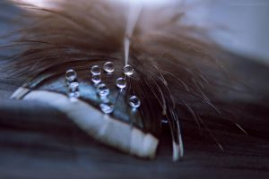 follow my tears X by JoannaRzeznikowska