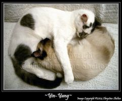 Yin-Yang Kitties by chrystine
