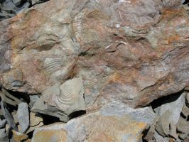 Fossil rocks by Critterinthedryer