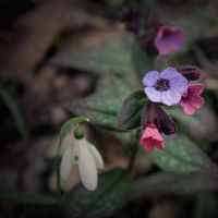 Bad flowers by Swaami
