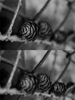 Pinecones I by xAmorphousx