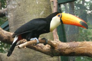 Toucan by picture-melanie