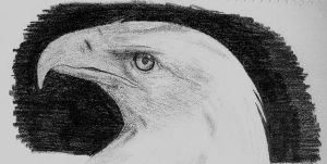Eagle by abchurches