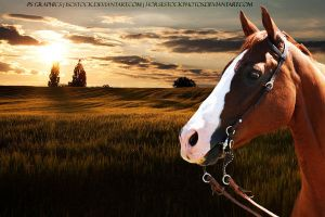 Chestnut with Sunset by PS-Graphics