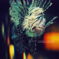 LionFish.light by JeanFan