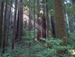 Redwood Sun 830307 by StockProject1