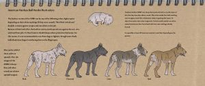 American Hairless Bull Herder breed sheet no.3 by Gutter-Mutt