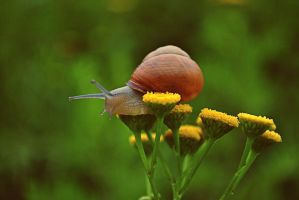 Snail On A Whim by rememo08