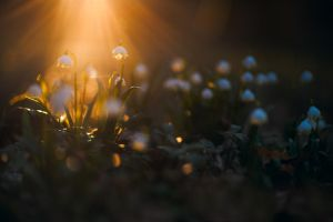 leucojum on fire by mescamesh