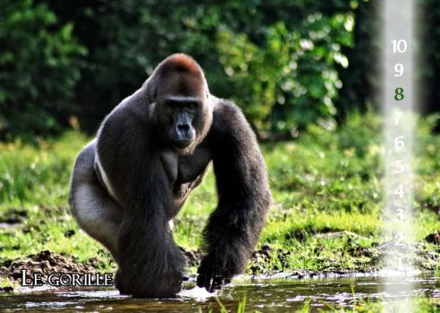 33 The Gorilla by Varagh