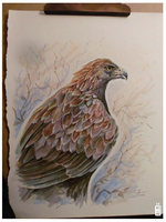 Golden eagle by griffsnuff