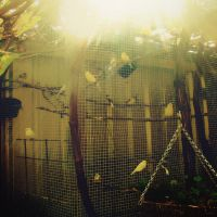 Birds in a Cage by whosclimbing
