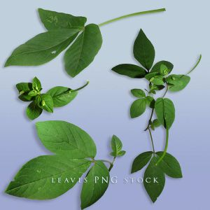 Leaves png stock by Wesley-Souza