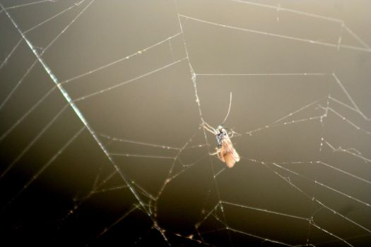 Kind of a fly in spiderweb by stylecore
