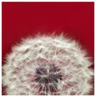 blow ball by carollaa