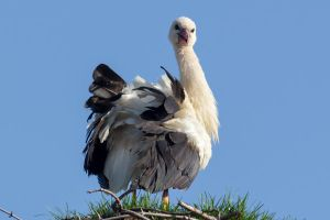 Stork or Ostrich? by WojciechGrzyb