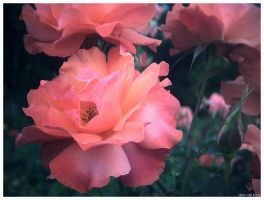 Flowers by Domx