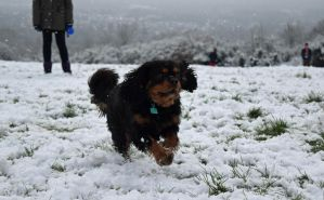Dog in the Snow by Streamwhisker