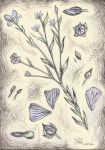 Linum extraaxillare by exlinum