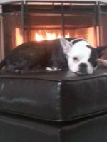 Bella by The Fire by Annaley