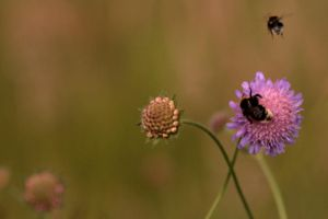 Bees by JAKOKTO