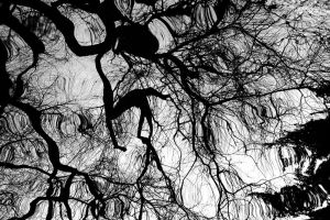 Weeping Willow Reflection by EarthHart