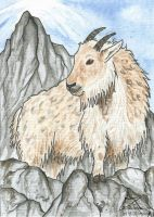 ACEO Myuna by Woodswallow