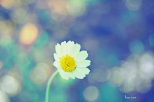 Morning daisy by LuizaLazar